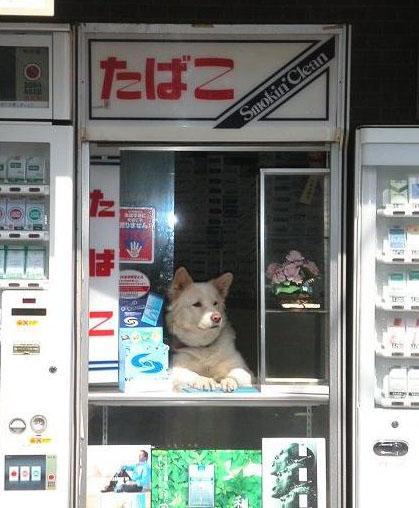 活動紹介(写真)